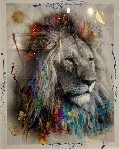 Cecil, Lion, by Arno Elias. Photograph. 54 x 43