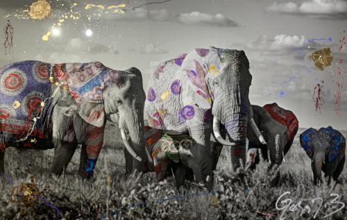 Mungano, Elephant, by Arno Elias. Photograpg 91 x 61